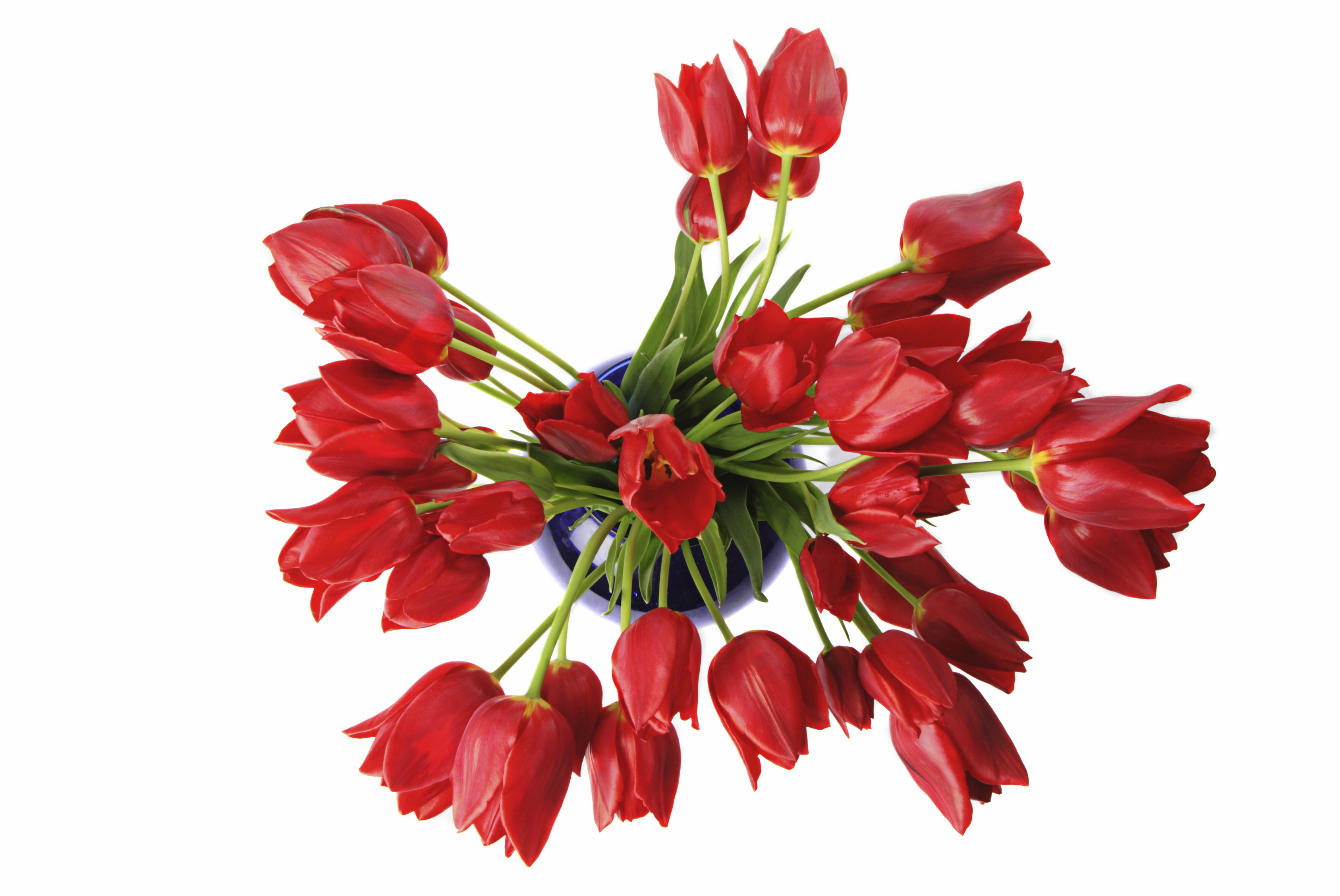 Tulips for Spring at Saturdaysoul.com