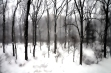snow-in-forest-2