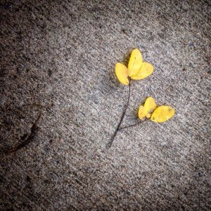 a yellow leaf on the ground #saturdaysoul