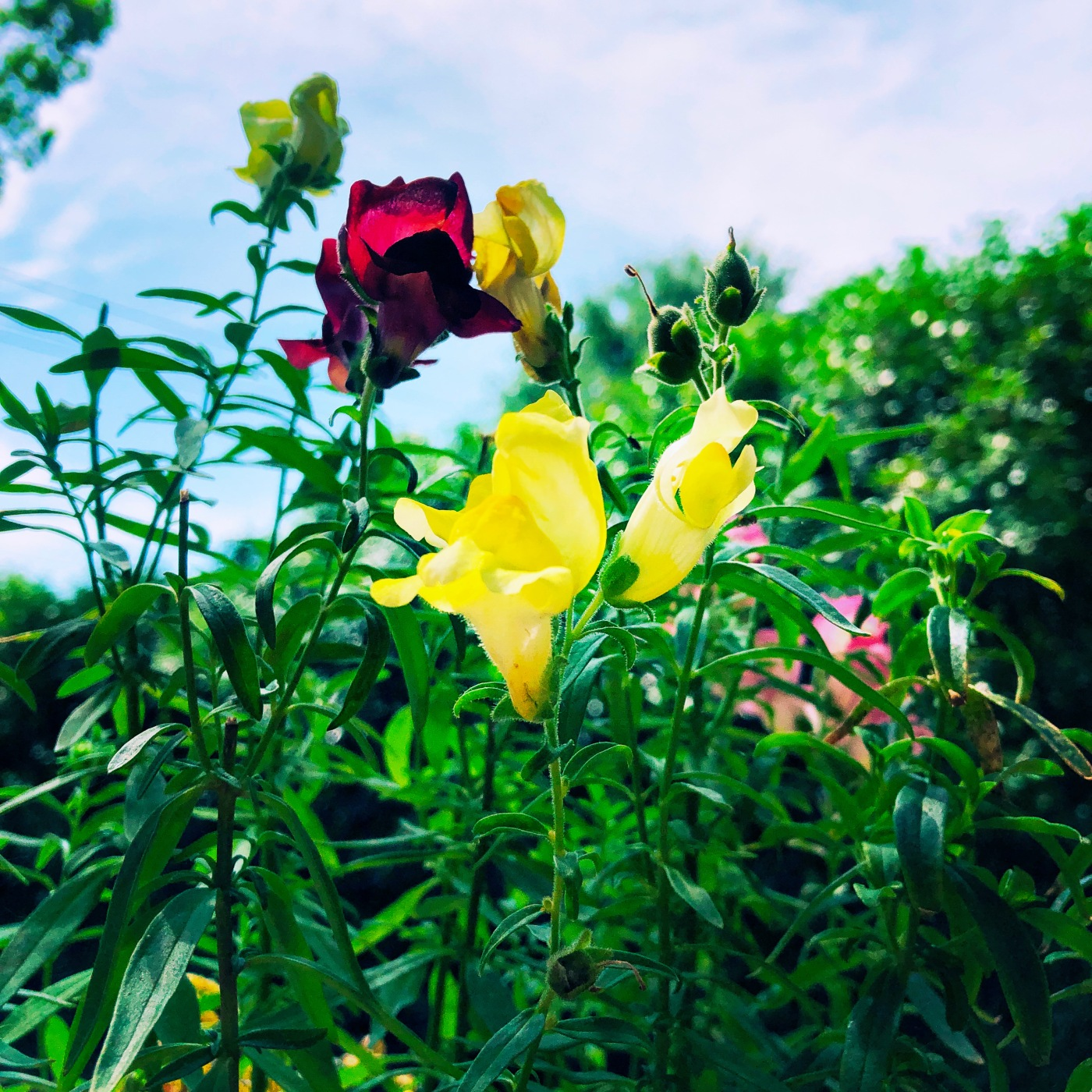 living life in radical amazement flowers against blue sky